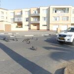 Why do turkeys cross the road?